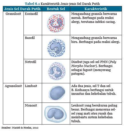 Karakteristik sel darah putih